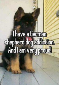 German Shepherd Dog Addiction