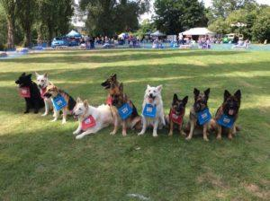 German Shepherd Dog Race Line