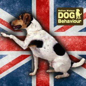 Nathan watson dog behaviour Union jack